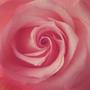 https://www.duolingo.com/malonie.love