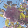 https://www.duolingo.com/profile/Paul607642