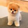 https://www.duolingo.com/Jungkook123123