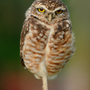 https://www.duolingo.com/profile/SaturdayplaceTom