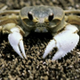 https://www.duolingo.com/profile/A_Russian_Crab