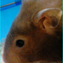 https://www.duolingo.com/profile/123hampster