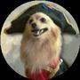 https://www.duolingo.com/Je.Suis.Napoleon