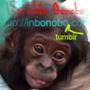 https://www.duolingo.com/inbon