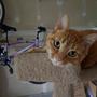 https://www.duolingo.com/fuzzywonkycats